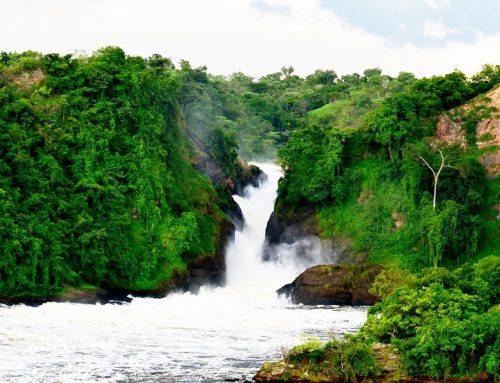 5 Nights 6 Days – Murchison Falls, Chimp Trekking Kibale,Boat Cruise Queen Elizabeth National Park