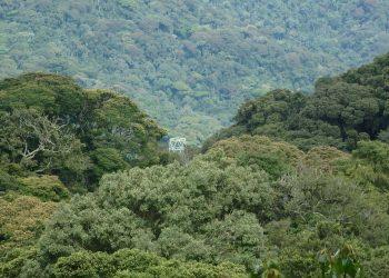 Chimpanzee Trekking Nyungwe Forest National Park