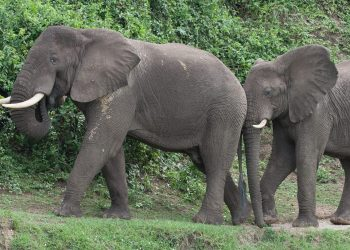 uganda_BIC_tours_animals-0615